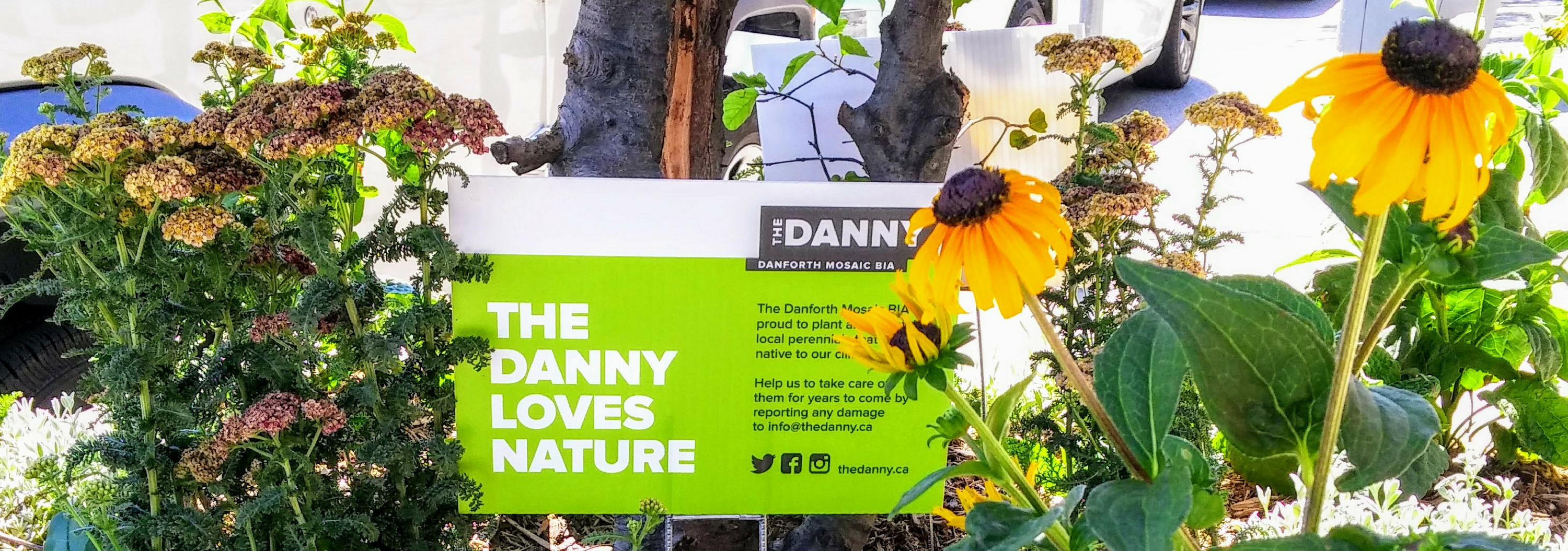 The Danny Loves Nature - Native Plants - Bee City - Danforth Mosaic Business Improvement Area, The Danny BIA, Toronto, Danforth East, Business, You'll Love What You Find Here